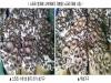 '병 재배 버섯' 수확 후 배지 재활용해 생산비 절감